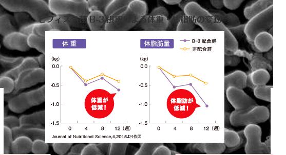 ビフィズス菌B-3摂取による体重・体脂肪の変動