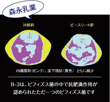 B-3は、ビフィズス菌の中で抗肥満作用が認められたただ一つのビフィズス菌です