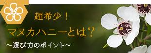 超希少!マヌカハニーとは?~選び方のポイント~